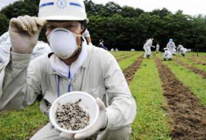 Zonnebloemen Fukushima